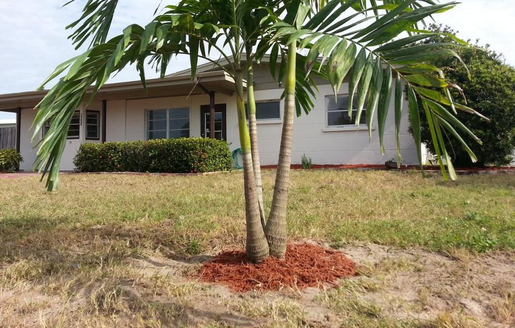 Investimenti immobiliari a Sarasota, in Florida